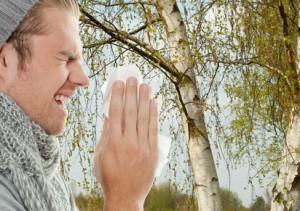 Niesen wegen Birkenpollen